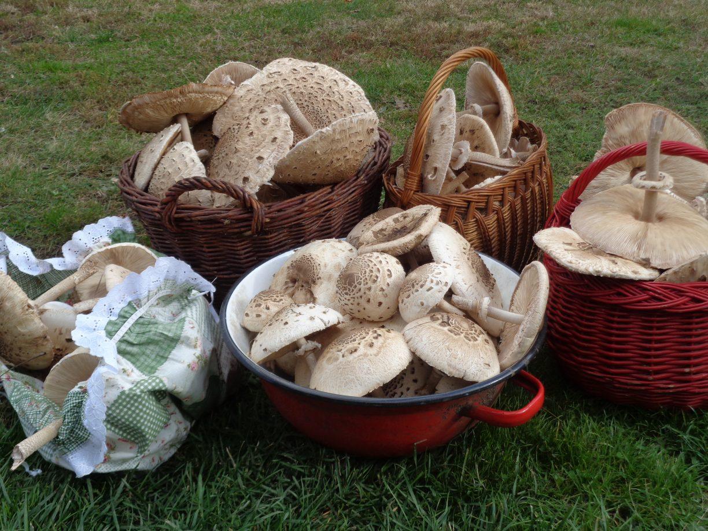 baskets-of-mushrooms