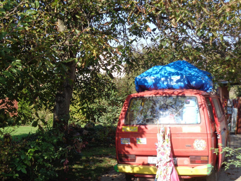 under-the-wallnuttree-again